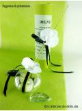 6 Orchidées blanc