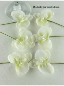6 Petites Orchidées PERLE ivoire