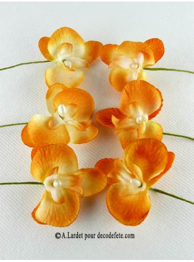 6 Petites Orchidées PERLE mandarine